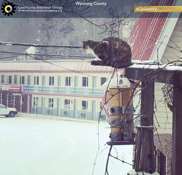 A cat in the winter at a hotel in Wyoming County, West Virginia
